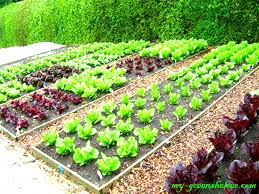 vegetable garden ideas for beginners interior design