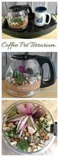 best 25 coffee plant ideas only on pinterest victoria tattoo