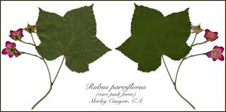 native plant nursery pa mountain native botanical nursery garden gifts hydroponics and