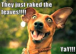 Happy Dog Meme - 10 puppies who totally love autumn season puptopia nyc blog