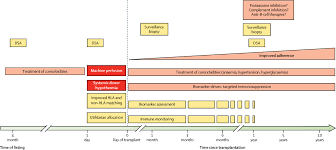 strategies for long term preservation of kidney graft function