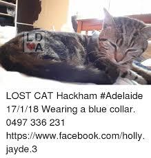 Lost Cat Meme - lost cat hackham adelaide 17118 wearing a blue collar 0497 336 231