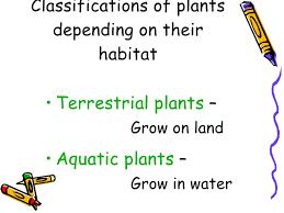 plants u2013 living u0026 surviving