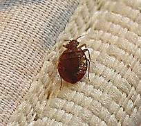 What Temperature Do Bed Bugs Die Eradicate Bed Bugs Knoxville U0026 East Tennessee