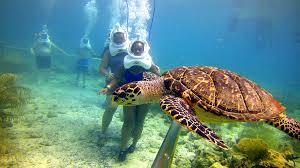 sea trek helmet diving u2014 a guided underwater walking tour
