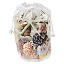 assorted seashells vibrant mix shells w finger starfish vase market