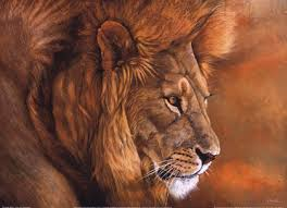 lion print lion prints and posters a special selection for your enjoyment