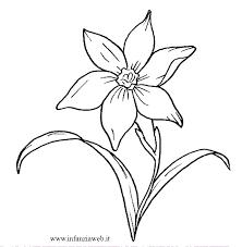 fiori disegni disegni da colorare categoria fiori e piante immagine