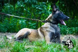 belgian malinois energy handcrafted leather dog leash for belgian malinois walking l320