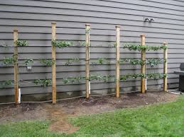 garden structure design scotia ny landscaping and landscape