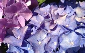 rutgers study focuses on the power of flowers u2013 simply gardening