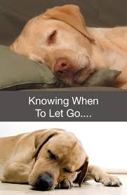 dog euthanasia knowing when to let go of your labrador