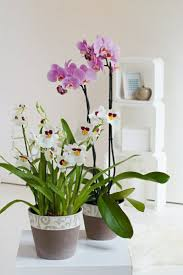Beautiful House Plants by Feng Shui Plants About The Protection And Convenience Of Indoor