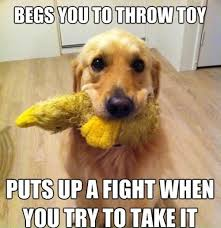 Orange Dog Meme - begs you to throw toy funny dog meme
