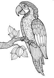 205 coloring parrot images parrots coloring