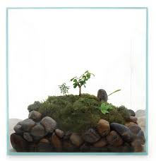66 best i am going to make a terrarium images on pinterest