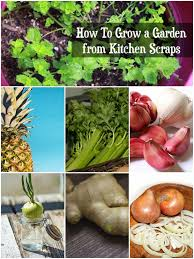 top 6 kitchen scraps you can use to grow a vegetable garden
