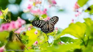 kuala lumpur butterfly park in lake gardens tun abdul razak