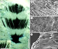 the colour of fossil feathers biology letters