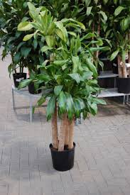 large houseplants decoration ideas exquisite image of accessories for home interior
