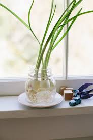 Easy Herbs To Grow Inside How To Grow Vegetables Indoors