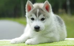 cute dog wallpapers cute puppies and dogs wallpaper wallpapersafari