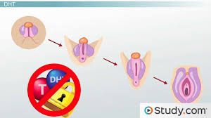 human reproduction study guide videos u0026 lessons study com