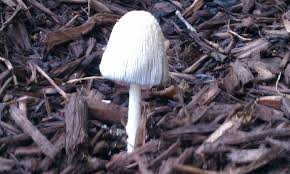 mushrooms growing in my vegetable garden best home design interior