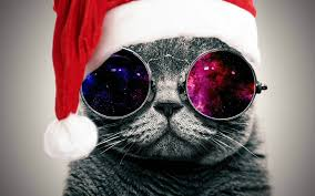 christmas glasses galaxy glasses cat christmas edition imgur