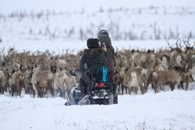 tundra explore canada u0027s arctic with tundra north tours guides u0026 packages