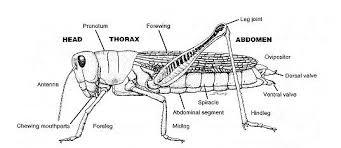 principles of biology ii lab