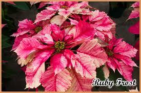 holiday open house november 11th u0026 12th bath garden center