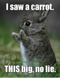 Lie Memes - i saw a carrot this big no lie memes and comics