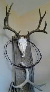 best 25 european mount ideas on pinterest euro mounts deer