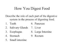 digestive system worksheet ppt video online download