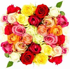 Colorful Roses Colorful Roses Beautiful Flower Bouquet On White Background