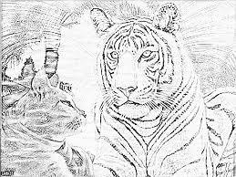 coloriage tigre with coloriage tigre fabulous coloriage tigre er