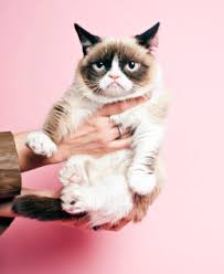 Frown Cat Meme - grumpy cat goes from meme to movie time com