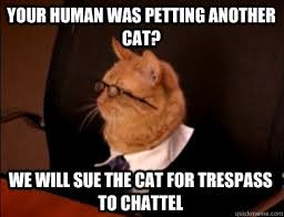 Lawyer Cat Meme - image result for cats dressed as lawyers legal humor pinterest