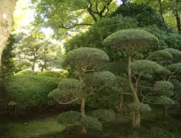 Topiary Cloud Trees - japanese garden in portland oregon carefully pruned not a