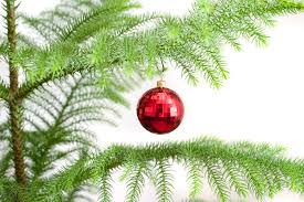 photo of single red bauble hanging on a christmas tree free