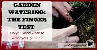 garden watering the