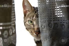 Sneaky Cat Meme - sneaky cat blank template imgflip