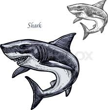 shark sketch vector fish icon isolated ocean predatory white