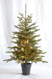pre lit 36 inch high by 29 inch diameter potted noble fir