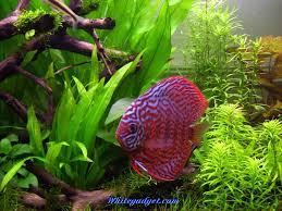 fish full hd quality images desktop live fish wallpaper free 39