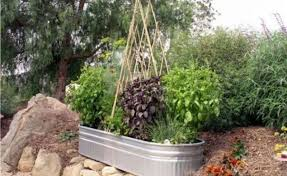 collection best small garden vegetables photos free home