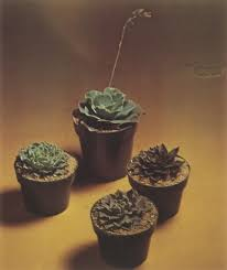 House Plants Diseases - preventing cacti pests and diseases preventing cacti pests and
