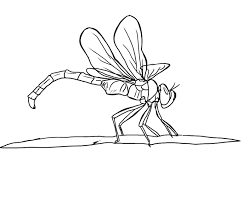 realistic animal coloring pages realistic dragonfly animal coloring page animal coloring pages