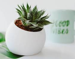Desk Plant Small Planter Etsy